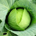 Чем полезна белокочанная капуста для женщин, мужчин, детей