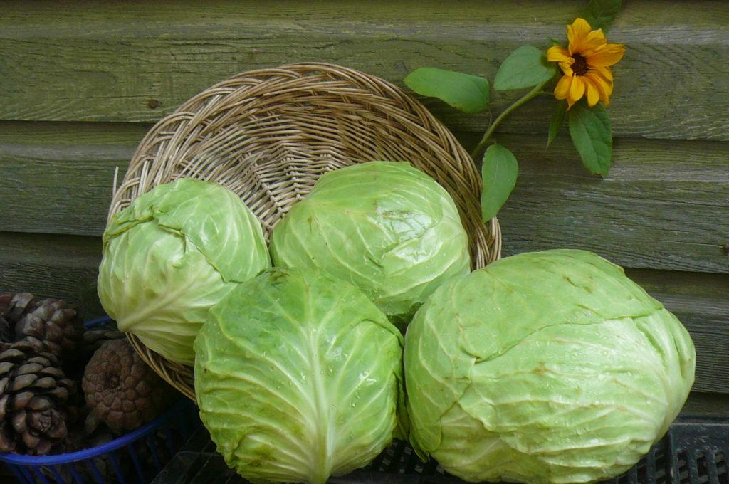 Белокочанная капуста: сколько стоит, состав, как варить