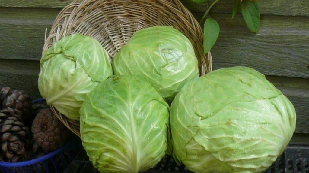 Калорийность капусты белокочанной на 100 грамм