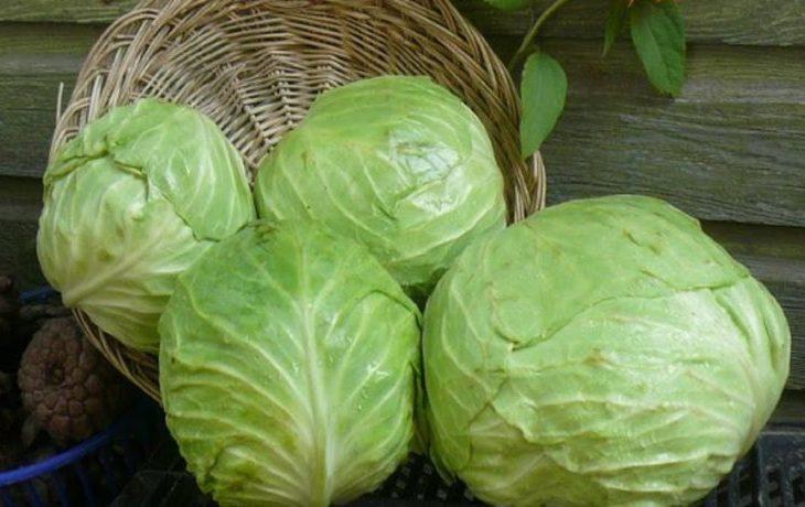 калорийность капусты белокочанной свежей