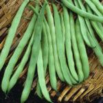 Семена стручковой фасоли: как выбрать, посадить и вырастить