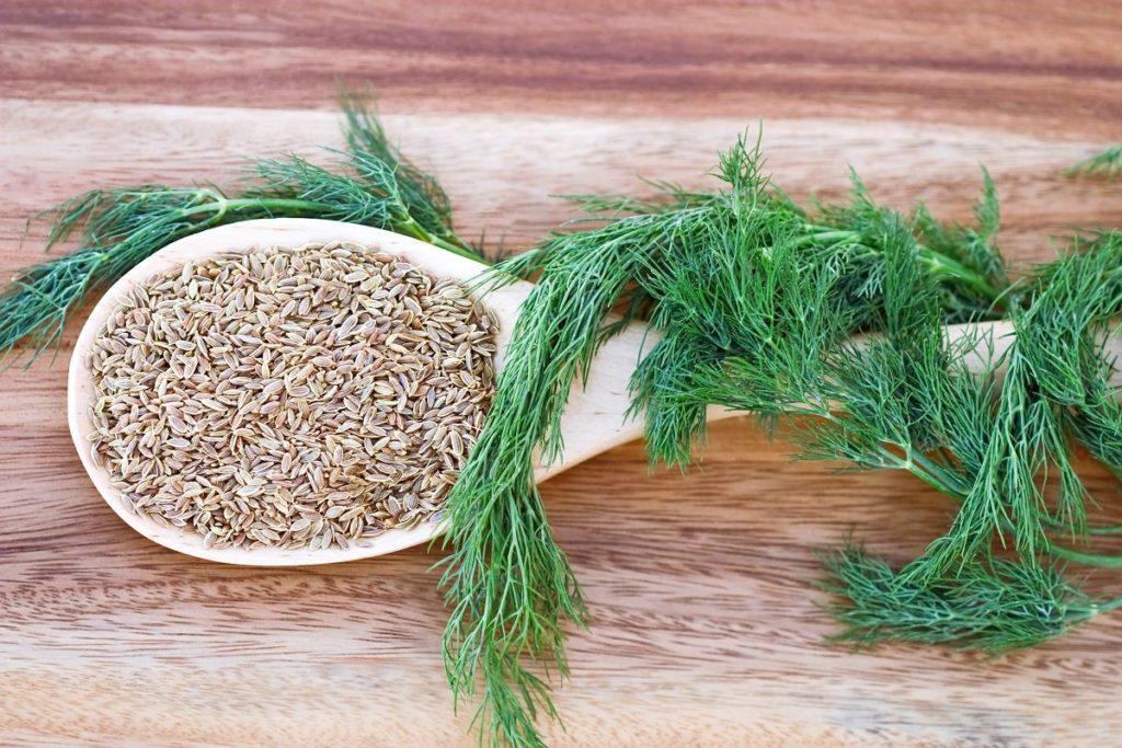 Семена укропа: лечение панкреатита, давления, при похудении