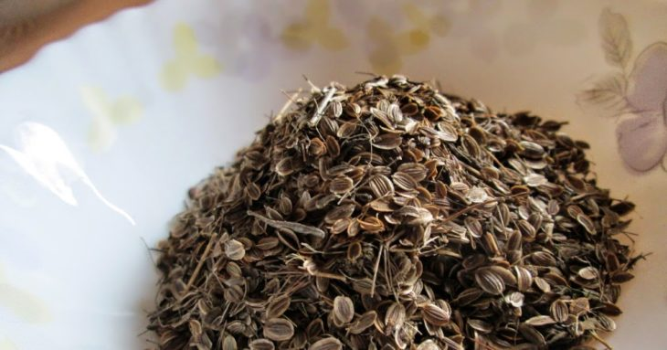 применение семян укропа